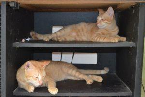 cat-in-a-box