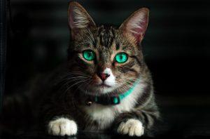 adorable-cat