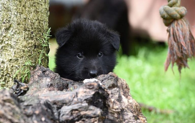 black puppy hiding behind brown wood