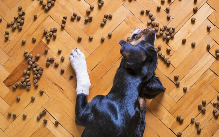 dog eating kibble dry dog food on the floor