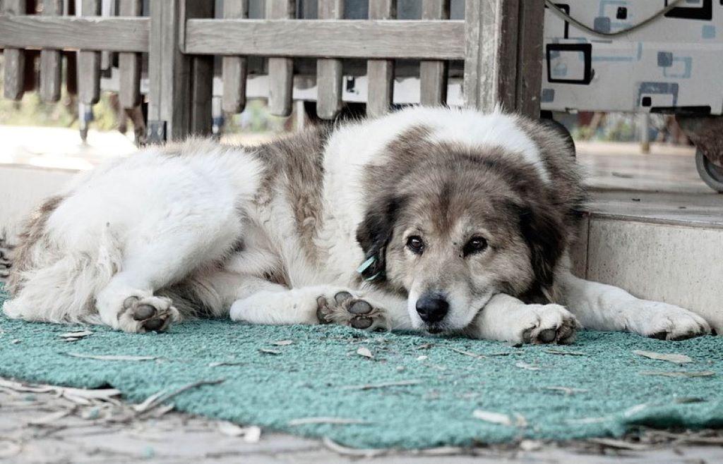 sad white dog sitting outdoors